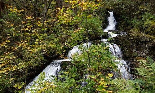 Beautiful fall colours on the Steelhead Falls walk.
