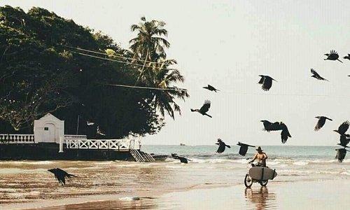 Weligama Surf Tours