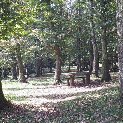 particolare del bosco