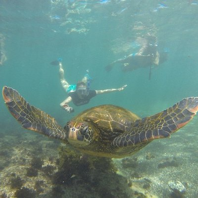 Underwater world @Galapagos