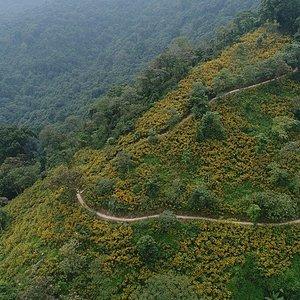 Winding way to Ba Vi National park