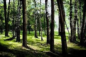 Жулебинский лес.