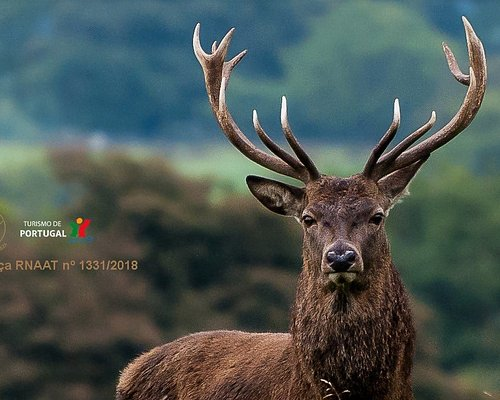 Veado Verde / Green Deer Nature Tourism - Lousa Mountain Coimbra, Portugal  Come with us, book n