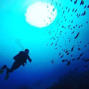 Diving in Ras Mohamed National Park