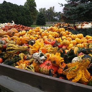 Pumpkins galore!