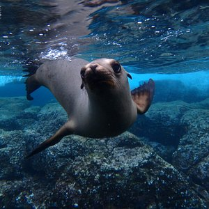 Nothing makes us as happy as playing with the juvenile sea lions!