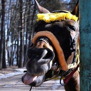 Похоже, лошадке весело! А вам?