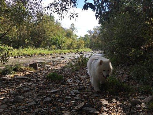 Our dog enjoying the trail walk