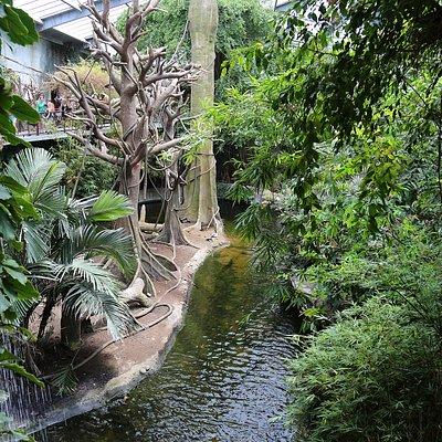 A simulated river in the jungle bio-dome.