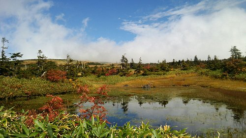 池塘と青空と植生が美しいバランス