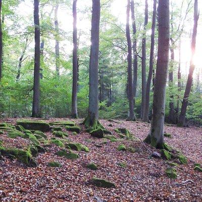 """Römische Siedlung """"Großer Berg"""" bei Kindsbach, hier standen einst Häuser"""