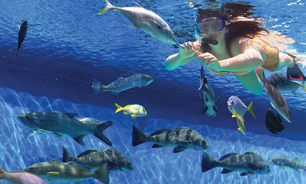 Get up close and personal with over 30 species of fish.