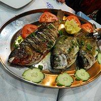 Skaros and Sargos fish