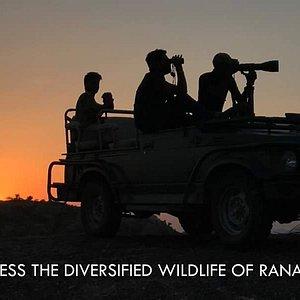 Ranakpur Jungle Safari
