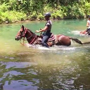 discover the swimming horses in Guadeloupe
