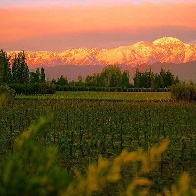 Wine Tour. Elegí cuál región vitivinícola de Mendoza querés conocer, con gastronomía destacada.