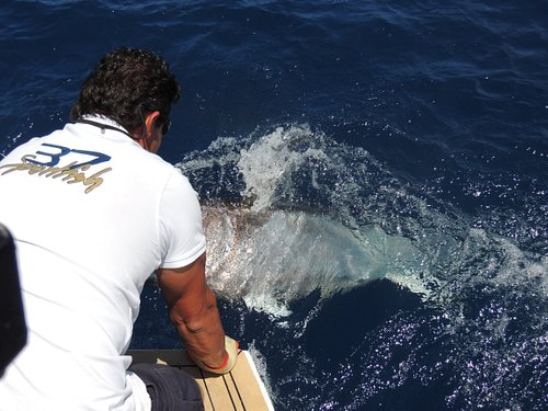 Releasing a nice Bluefin tuna in Mallorca