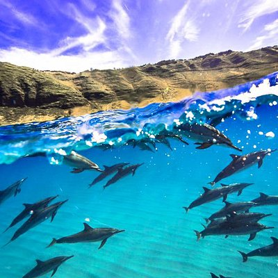 100's of Dolphins in Nature