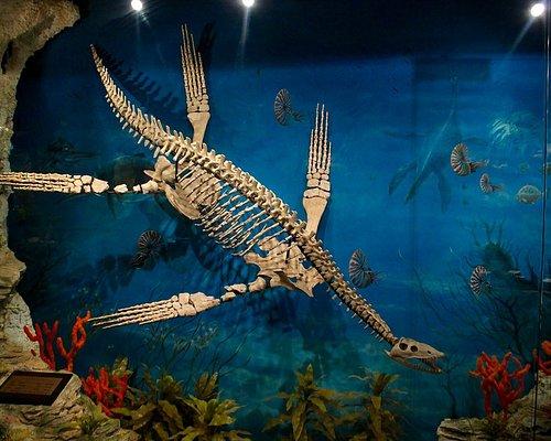 Opalised Plesiosaur 'Nessy'