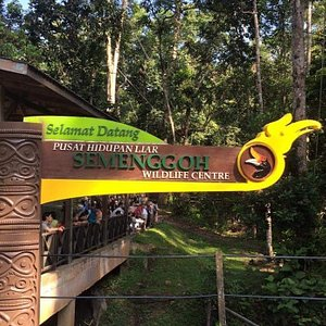 Semenggoh orangutans Nature Reserve, 45 minute drive from City Centre, 4 pax below, to & fro Rm