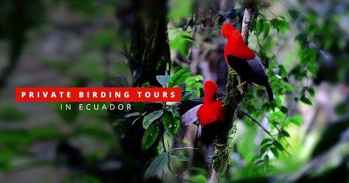 We organize first class private birdwatching tours in Ecuador!