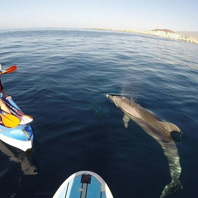 That s the way how the dolphs say hello!