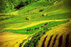 3-day trekking in Sapa: Hoang Lien National Park