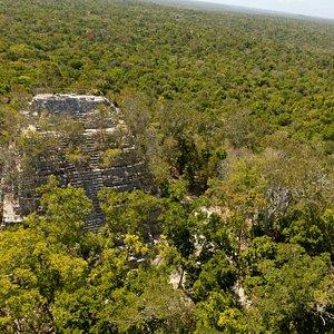 La Danta @ El Mirador - Rio Azul National Park