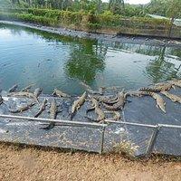 Lots of crocs