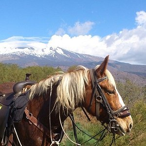 Welcome to our beautiful Etna region in Sicily. Let horses and nature wake up your soul.