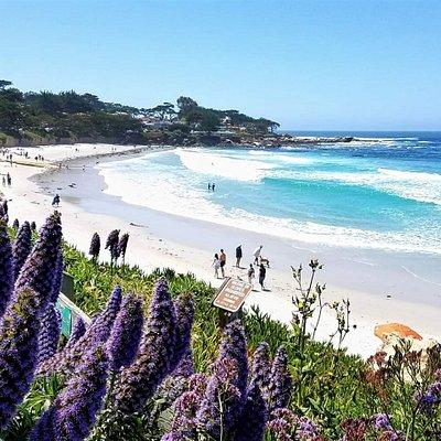 Our go to getaway beach in Nor Cal - Carmel Beach