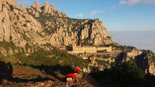 Tions amagats a Montserrat