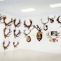 Do you know antlers have world record world wide?