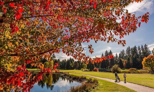 Lynnwood Golf Course 10th Fairway