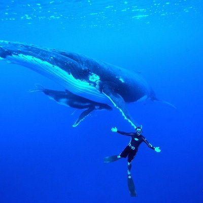 Heifara has a special connection with whales