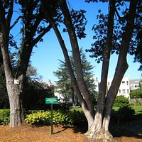 At the heart of Pacific Heights