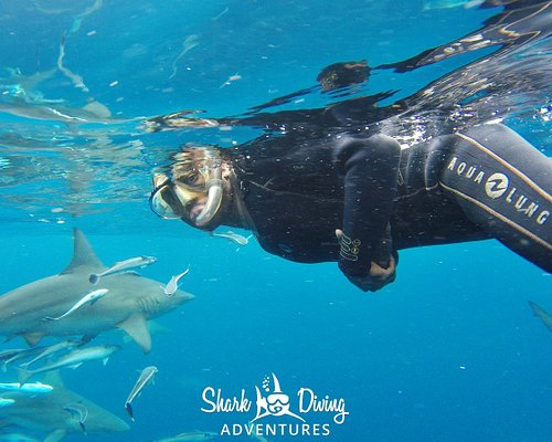 Up close and personal with Sharks!!