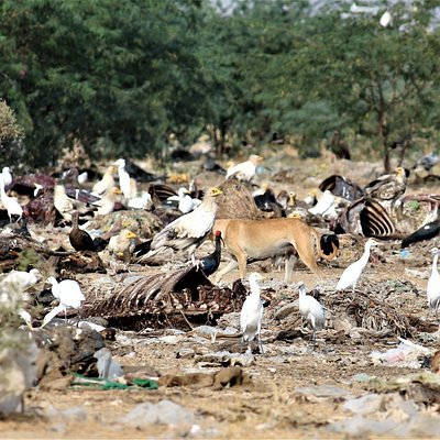 Different kinds of birds on the carcasses