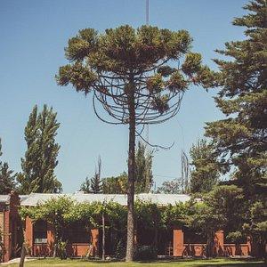 Bodega Hacienda del Plata
