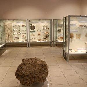 alcuni fossili