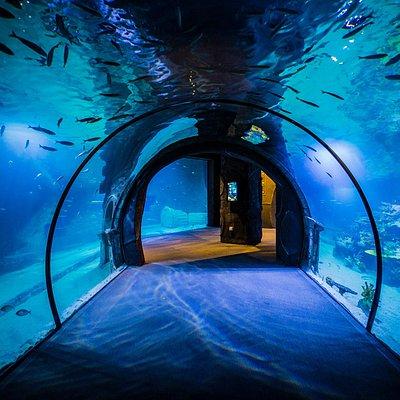Funtastic Aquarium İzmir - Türkiye'nin yerden başlayan ilk ve tek akvaryumu