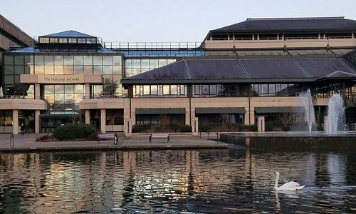 The swans of the National Archives