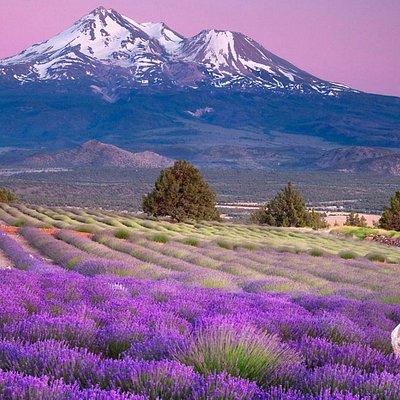 Notre Belle Provence