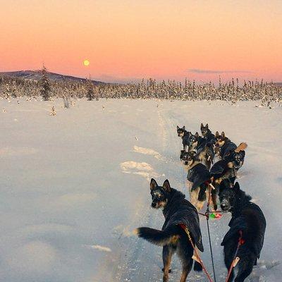 January moonrise near Black Spruce Dog Sledding