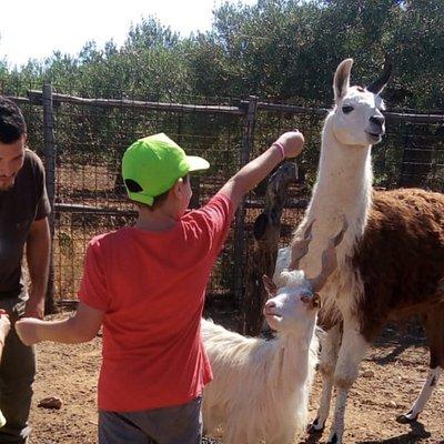 Bambini danno da mangiare al Lama e alla Capra Girgentana