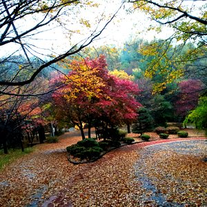 Autumn colors on a wet day at Bomunsan
