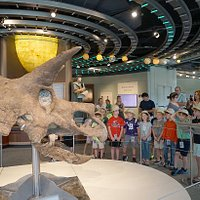 On long-term loan from the Todd Graves Family and Raising Canes, Jason the Triceratops is one of the most complete skulls ever found.