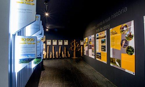 Exposição   Exhibition