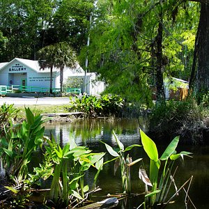 Looking on to Big Cypress Gallery from Tamiami Trail.