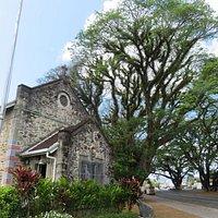 Jamaican Raintree overlooks St David's.